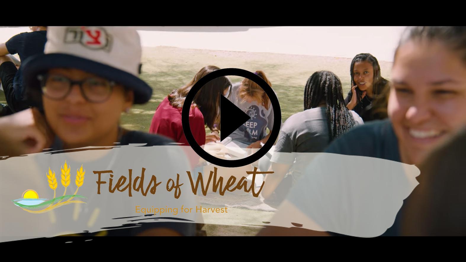 fields of wheat promo video